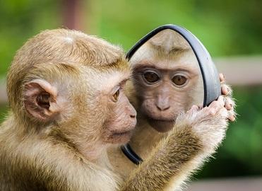 Monkey with Mirror